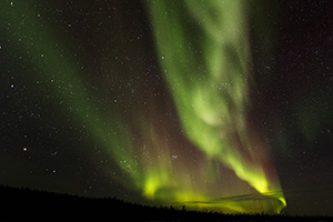 Aurora Night Black Spruce Forest -- © Haywardwildlife.com